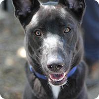 Adopt A Pet :: Ranger - Goleta, CA