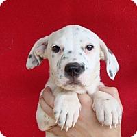 Adopt A Pet :: Alina - Oviedo, FL