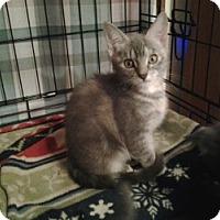 Adopt A Pet :: Doris - Middletown, CT