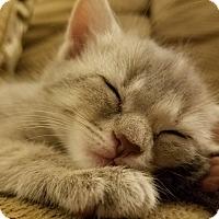 Adopt A Pet :: Z - Richmond, VA