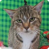 Adopt A Pet :: Noel - Lloydminster, AB