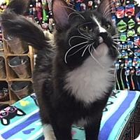 Adopt A Pet :: Mitchell - McKinney, TX