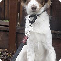 Adopt A Pet :: Phoenix - Palo Alto, CA