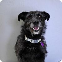 Adopt A Pet :: Emma - Pontiac, MI