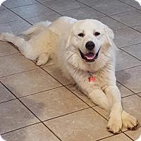 Adopt A Pet :: Blizzard - Potomac, MD
