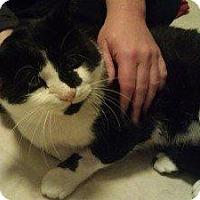 Adopt A Pet :: Tango - Chaska, MN