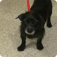 Adopt A Pet :: BENNY - Sugar Land, TX