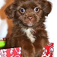 Adopt A Pet :: *Lorna - PENDING - Westport, CT
