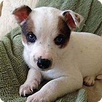 Adopt A Pet :: Burton - Marietta, GA
