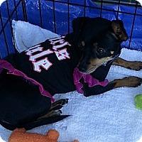 Adopt A Pet :: Mimi - Tumwater, WA