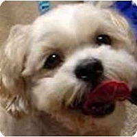 Adopt A Pet :: Gordy-NJ - Mays Landing, NJ