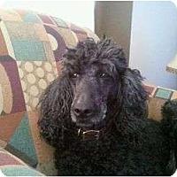Adopt A Pet :: Betty - Hilliard, OH