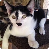 Adopt A Pet :: Panda - Houston, TX