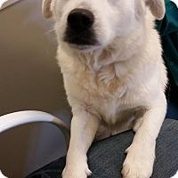 Adopt A Pet :: Shayla - Gainesville, FL