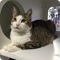 Adopt A Pet :: Cupcake - Herndon, VA
