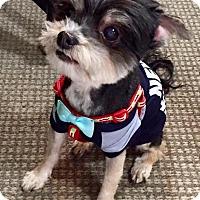 Adopt A Pet :: Humphrey - Encino, CA