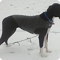 Adopt A Pet :: Daisy - O'Fallon, MO
