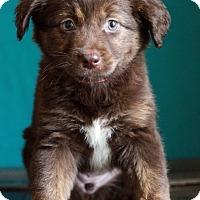 Adopt A Pet :: Smudge - Waldorf, MD