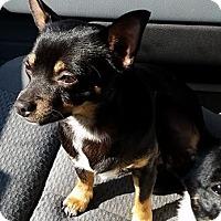 Adopt A Pet :: Bink - Gainesville, FL