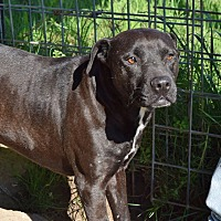 Adopt A Pet :: Faith - Iola, TX