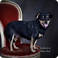 Adopt A Pet :: Spring - Middletown, RI