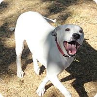 Adopt A Pet :: Meaghan - Westminster, CO