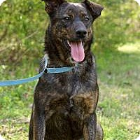 Adopt A Pet :: Alex - Charleston, AR