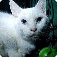 Adopt A Pet :: Tootsie (MRM) 8.1.08 - Orlando, FL