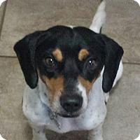 Adopt A Pet :: Roscoe - Cary, NC