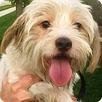 Adopt A Pet :: Nugget - Oswego, IL