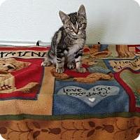 Adopt A Pet :: Gibson - China, MI
