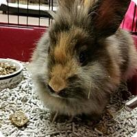 Adopt A Pet :: Harvey - Chambersburg, PA
