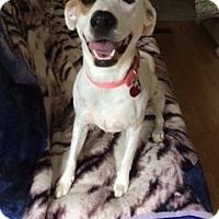 Adopt A Pet :: Natalie - Baraboo, WI