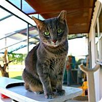 Adopt A Pet :: Paula Parentiss - Killeen, TX
