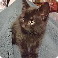 Adopt A Pet :: Luna - Evansville, IN