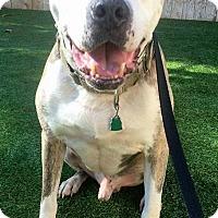 Adopt A Pet :: Jimmy - Atlanta, GA
