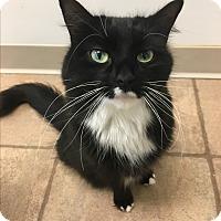 Adopt A Pet :: Scarlett - Cloquet, MN