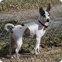 Adopt A Pet :: Olaf - Richardson, TX