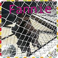 Adopt A Pet :: Fannie - Donaldsonville, LA