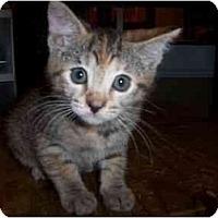 Adopt A Pet :: May - Irvine, CA
