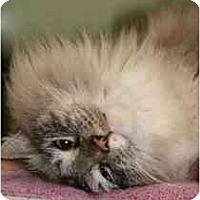 Adopt A Pet :: Tripp - Marietta, GA