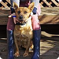 Adopt A Pet :: Sandy sweety - Sacramento, CA