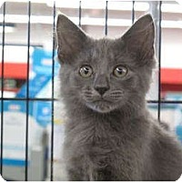 Adopt A Pet :: Rio - Port Republic, MD