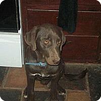 Adopt A Pet :: Bojangles - Alliance, NE