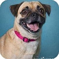 Adopt A Pet :: Babs - Phoenix, AZ