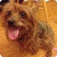 Adopt A Pet :: Bella - Medford, MA