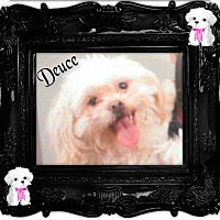 Adopt A Pet :: Deuce - LaGrange, OH