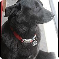 Adopt A Pet :: Suzy - Rockwall, TX