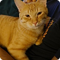 Adopt A Pet :: Trevor - Long Beach, NY