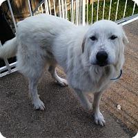 Adopt A Pet :: Charlotte - Kyle, TX